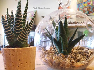 Haworthia in cork and hanging glass terrarium with shells