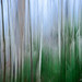 Small photo of Birch Tree Forest