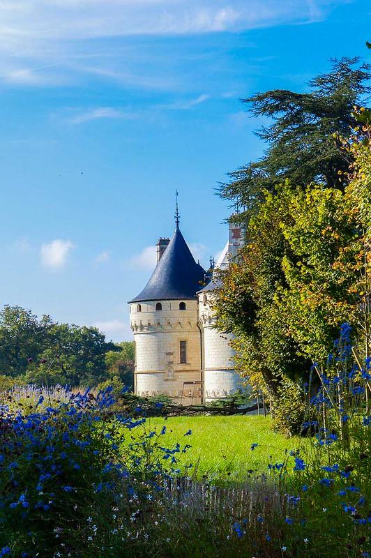 Château de Chaumont Wild Flowers