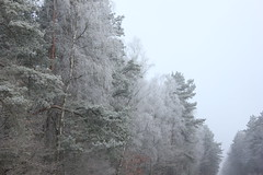 Im Winterwald mit Schnee 2015