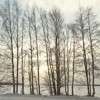 Still see the sun. #Lulea #trees #Sweden February 2014