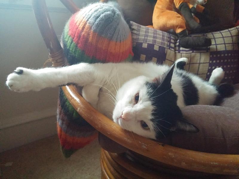 The Cat Life - Sunbathing