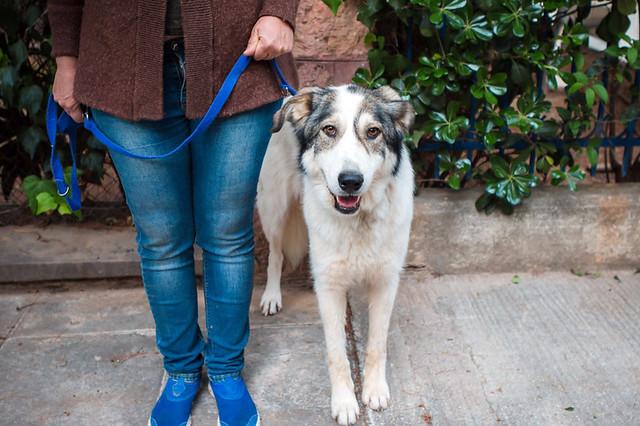 Bianca for adoption