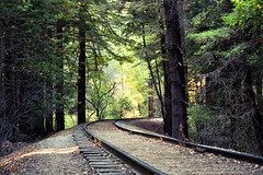 Walk in Henry Cowell State Park