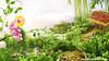Food landscape - Vietnam Food Stylist