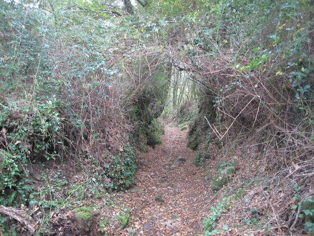 Camino en el PR-G 119 Ruta do Xabriña