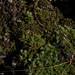 moss, Shenandoah National Park, jdy326 XX201211213476.jpg