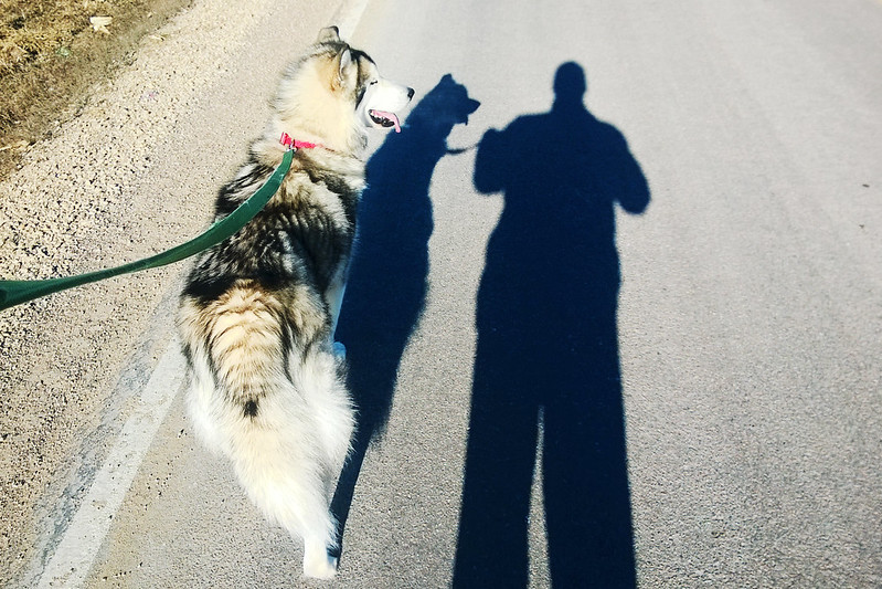 2/365. mile 2 of 9 mile run with frida.
