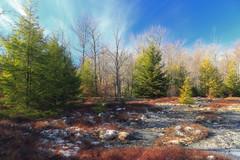Bartlett Mountain (15)