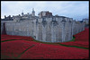 The Tower of London Poppys 1 by MTB1975