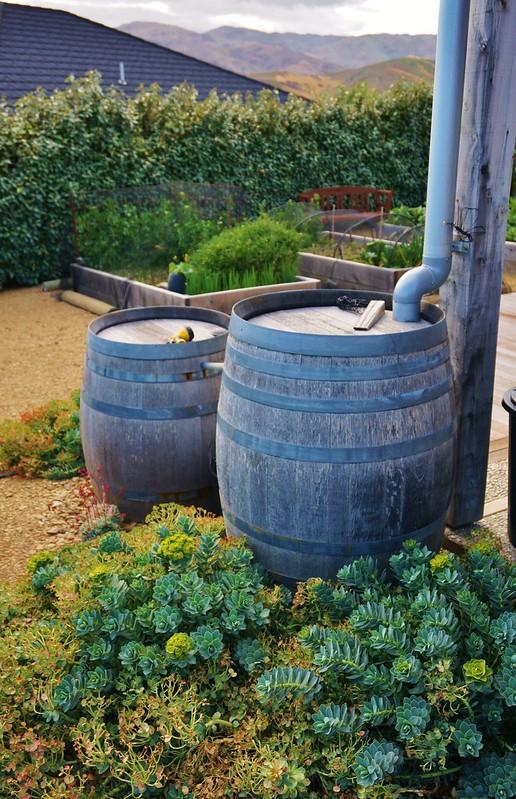 a Rainwater harvesting barrels