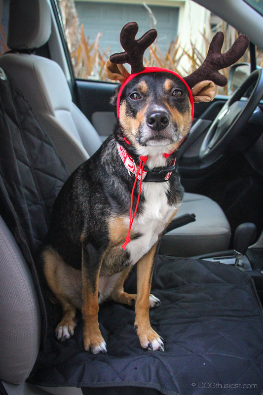 Have you been good? This guy is ready to deliver presents to the good dogs out there.