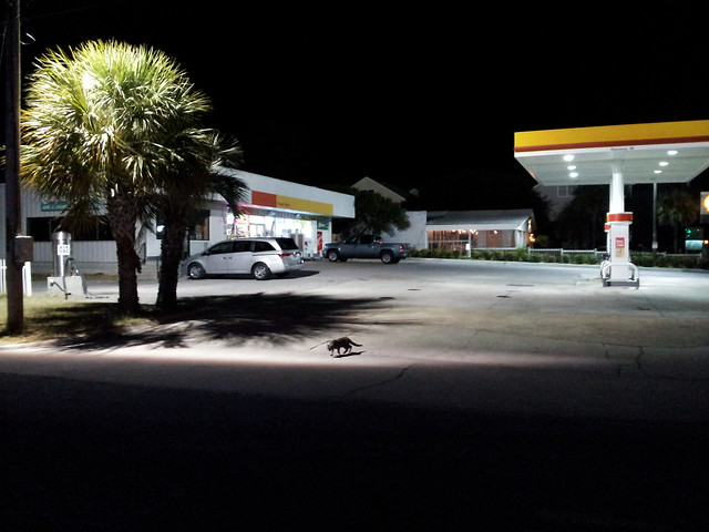 a cat at a gas station at night