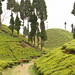Gopaldhara Tea Garden 35