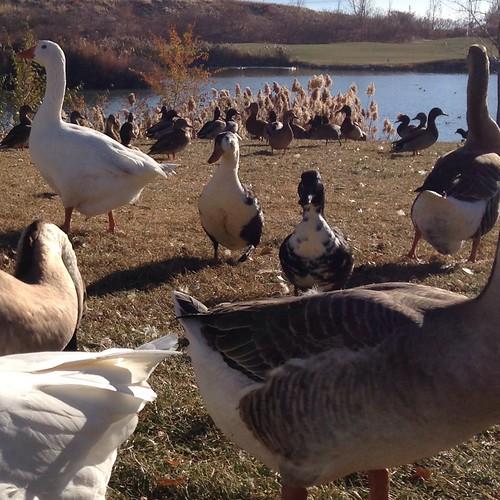 clegg pond