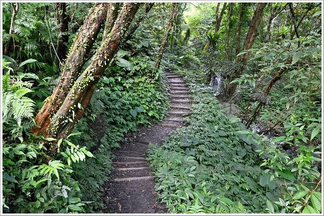 聖母山莊聖母登山步道宜蘭礁溪012-DSC_6634