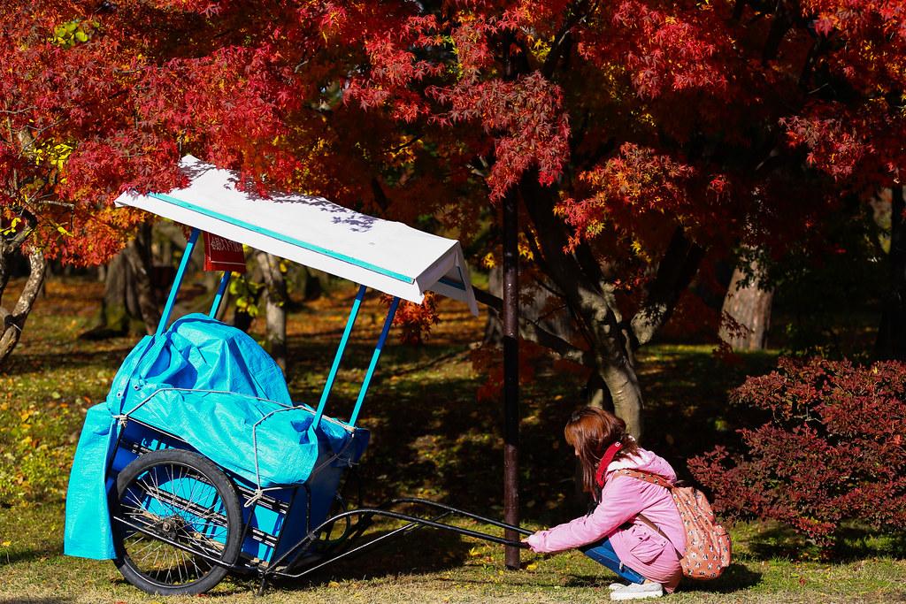 【2014日本賞楓自由行】日本賞楓熱門景點 之 古城下的散策,青森縣‧弘前城(弘前市役所/弘前公園)。