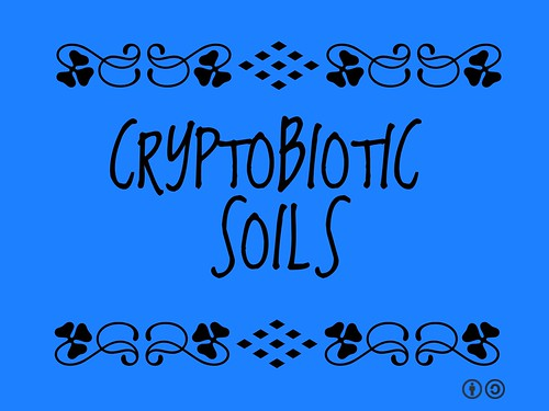 Buzzword Bingo: Cryptobiotic Soils
