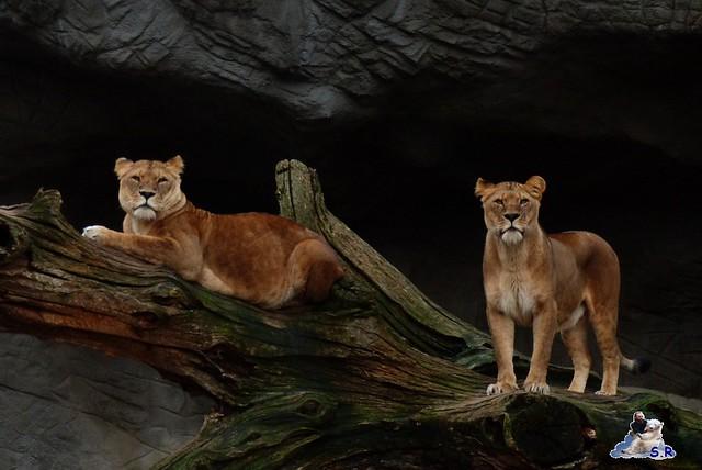 Tierpark Hagenbeck 2.01.2015 118