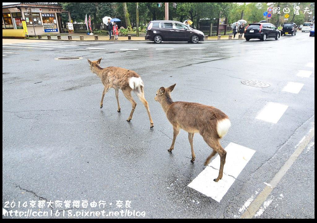 2014京都大阪賞櫻自由行.奈良DSC_0939