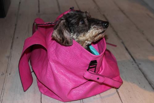 posetta Baddog