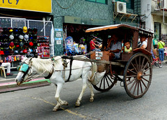 Horse drawn transport Laoag. Philippines.