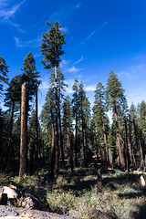 Kings Canyon & Sequoia - 131