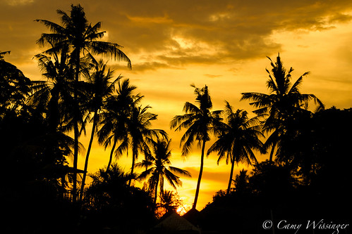 sunset bali beach palms indonesia lovina