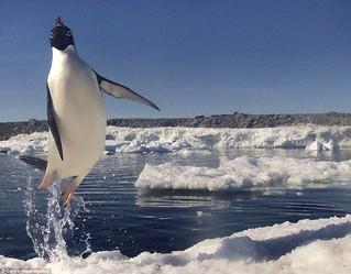 penguin-jump005