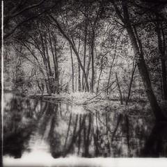 A walk through the woods in Woodstock! #woods #woodstockontario #trees #water #pond #blackandwhitephotography #eduardotavares @eduardontavares