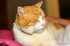 Cats-0018-20141027.jpg