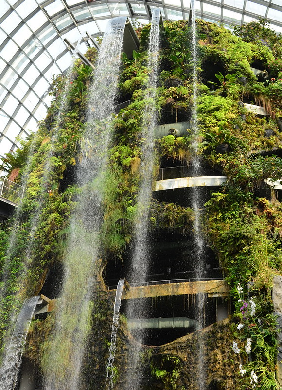 Cloud Forest Dome 1