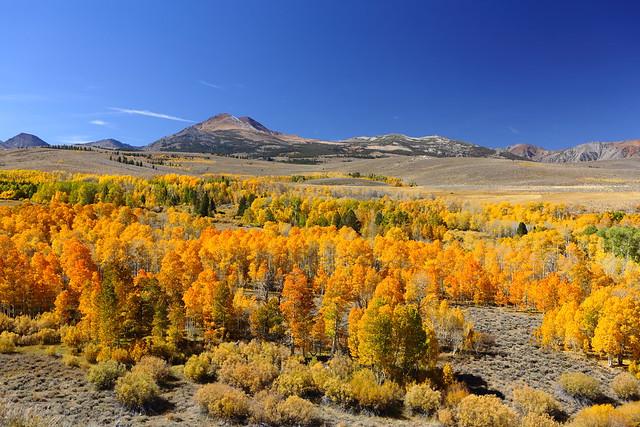 Mono County Fall Color_10-11-14_0089