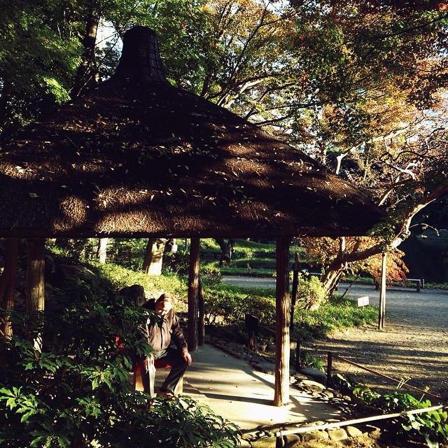 В осени люблю свет, листья и прохладный воздух🍁🍃🍂🌾