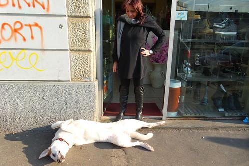 Un cane che si gode il sole di novembre
