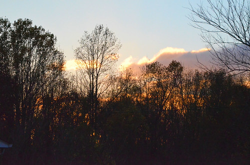 photos photography md croom missnicole sunset silhouette trees maryland