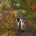 Muddy Walk by trevorhicks