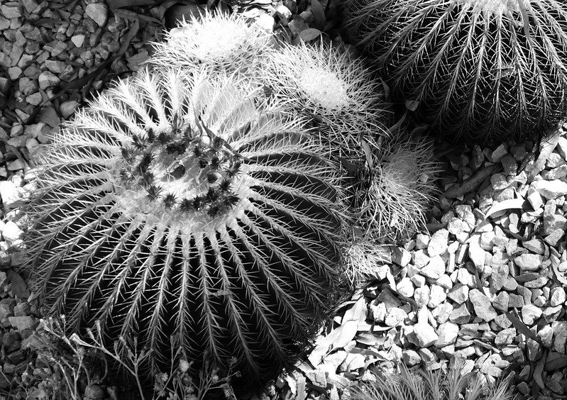 Cactus at the Getty