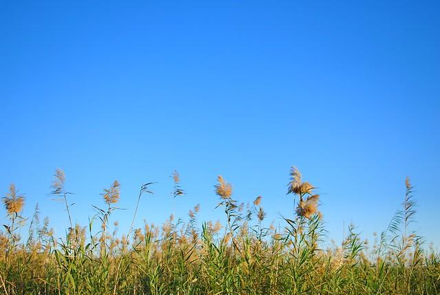 Tall grass 03