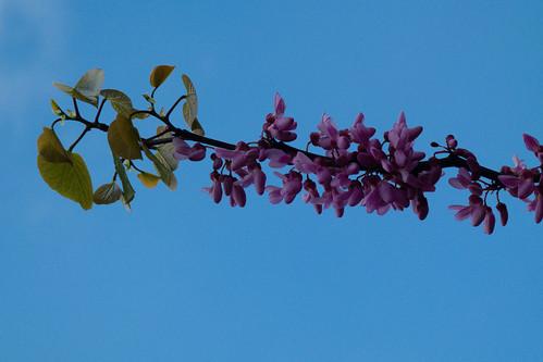 Purple petals, above