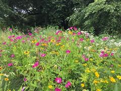 Native Plant Garden Meadow