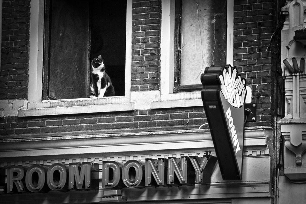 Donny Ze Cat