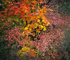 Colors of autumn_IV