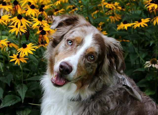 Posing Near The Flowers