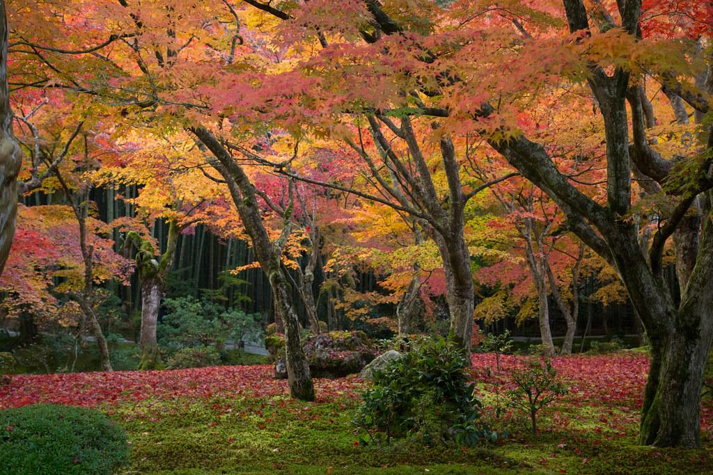 Morning Enkoji in Autumn 圓光寺秋の早朝特別拝観