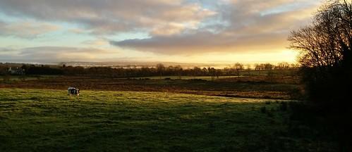 sky grass sunrise cow northernireland ballymena ulster antrim ahoghill