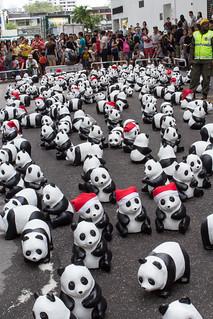1600_Panda_Jalan_Lintang_Penang_05
