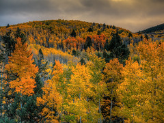 Fall Color at Santa Fe Ski Basin, New Mexico