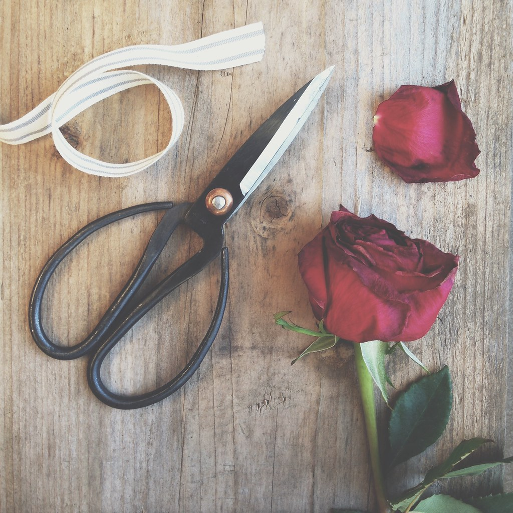 Rose Vignette | personallyandrea.com