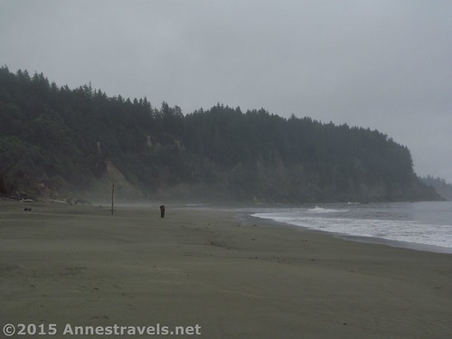 Looking south on Third Beach, Olympic National Park, Washington
